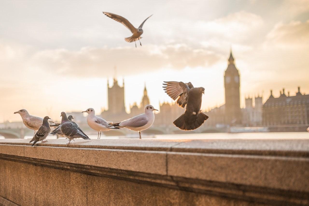 Repousser pigeon d'un balcon